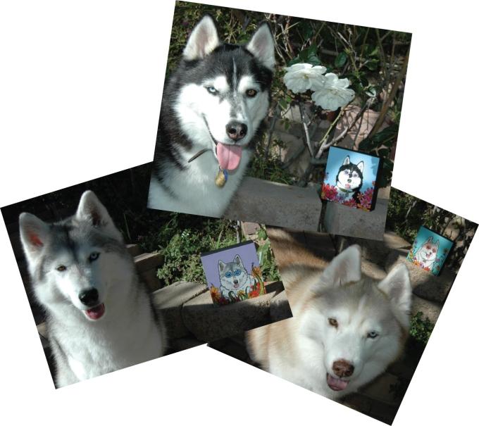 Husky Pet Portraits by RobiniArt
