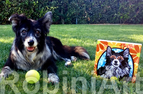Border Collie RobiniArt 2016