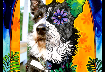 Custom acrylic portrait of Barley the Border Collie Schnauzer Mix, © RobiniArt, 2015